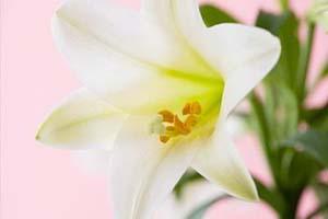 春天预防白癜风,合肥白癜风治疗多少钱